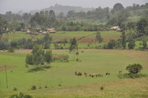 Zwischen Jimma und Bonga, Äthiopien, Copyright: Ekkehart Schmidt-Fink