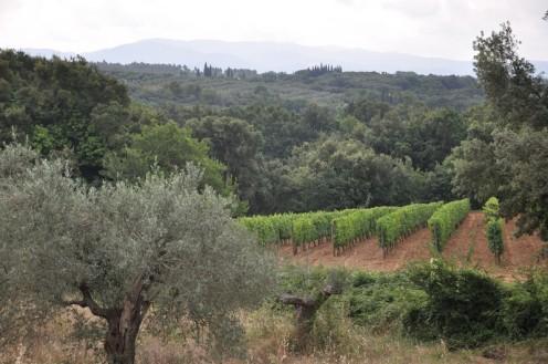 Toscana bei Bibbona  © Ekkehart Schmidt