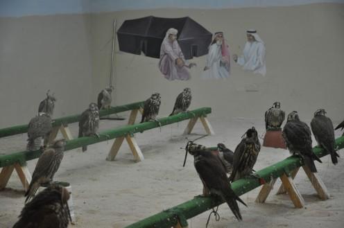 Der Falkenmarkt in Doha © Ekkehart Schmidt