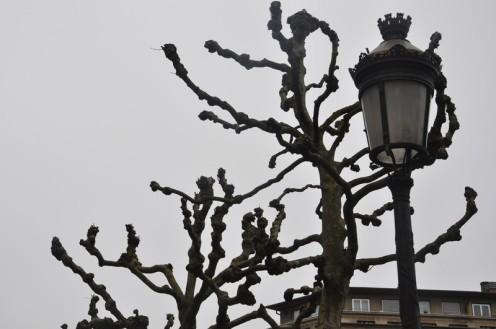 Die Platanen der Place de Paris © Ekkehart Schmidt