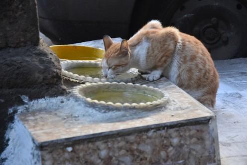 Cairo loves its cats © Ekkehart Schmidt