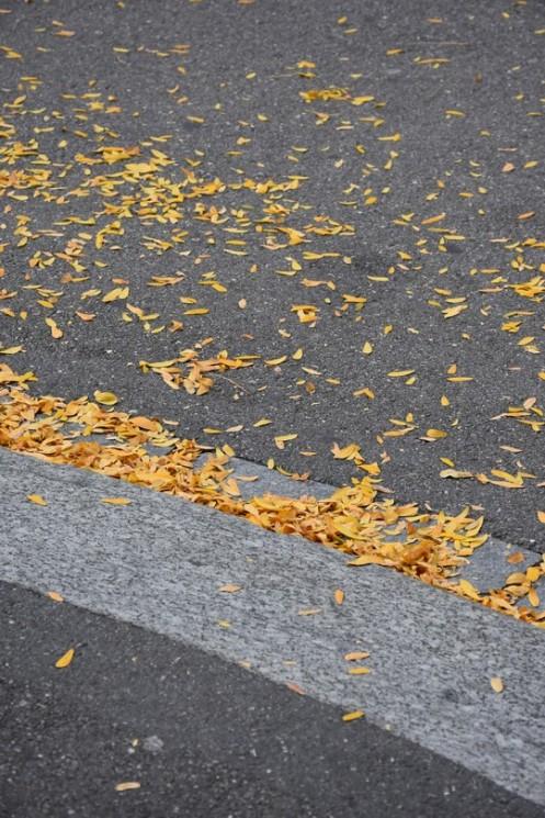 Gelbe Blätter an Bordsteinkante_Zürich ⓒ Ekkehart Schmidt