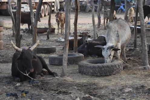 https://burkina24.com/2013/09/06/arrondissement-5-de-ouagadougou-marche-de-betail-ou-dordures/