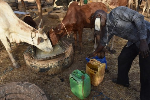 Marché de bétail de Tampouy Kilwin_Ouagadougou © Ekkehart Schmidt