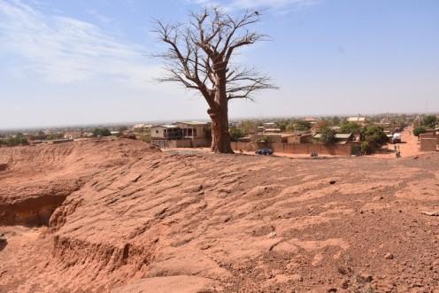 Der Baobab in der rue de Wiesbaden_Ouagadougou © Ekkehart Schmidt