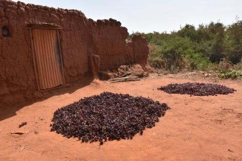 Bissap und Jus Tamarin_Ouagadougou © Ekkehart Schmidt